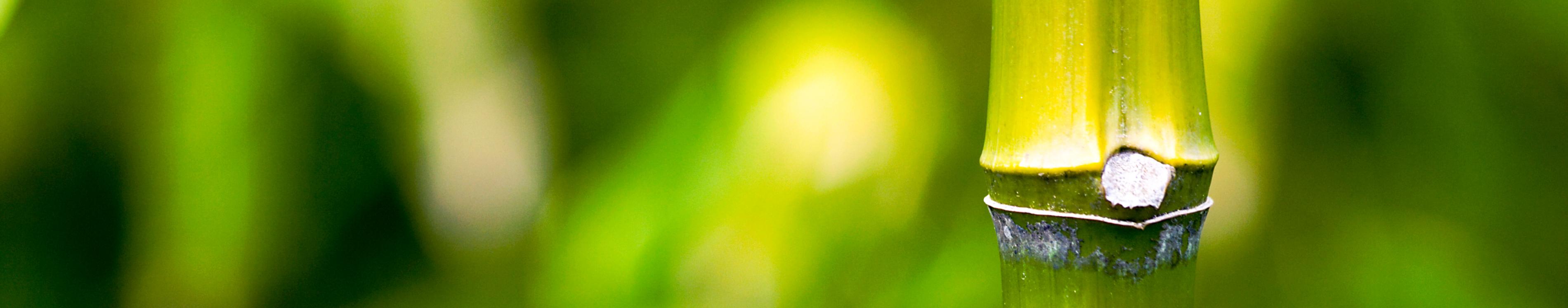 ohana gingergrass bamboo scrub