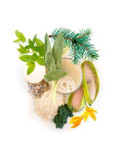 moroccan mint tea silt purifier